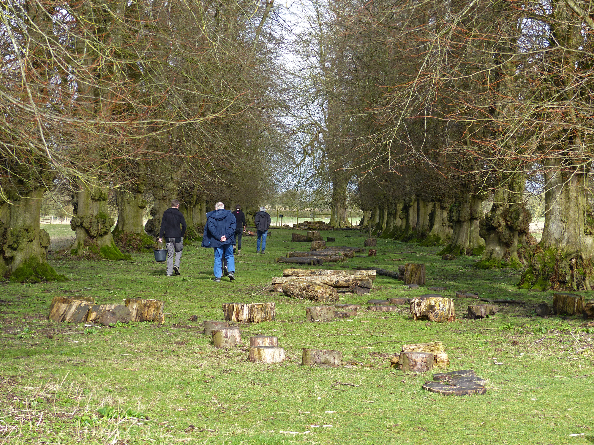 people walking in wood
